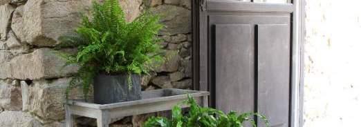 Entretien et soins des plantes d'interieur