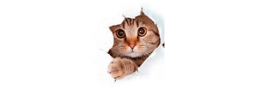 Accueillir son chat
