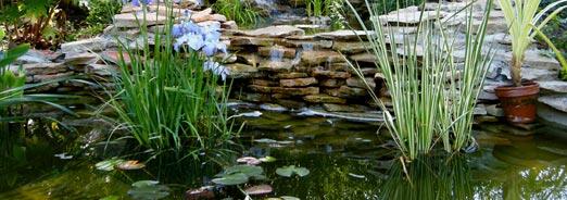 Créer un bassin, Les conseils Magasin vert :