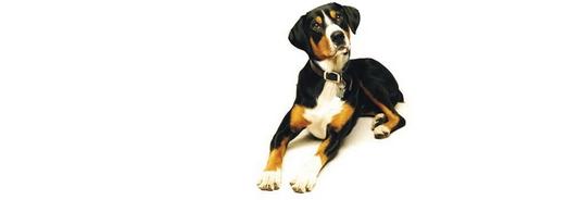Comment choisir les bonnes croquettes pour votre chien ?