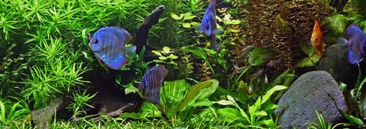 Créer un aquarium