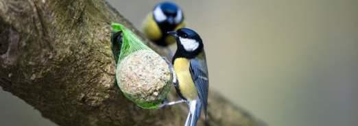 oiseaux-de-la-nature