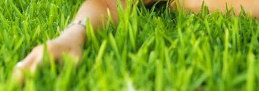 la-pelouse