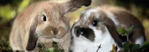petits-mammiferes