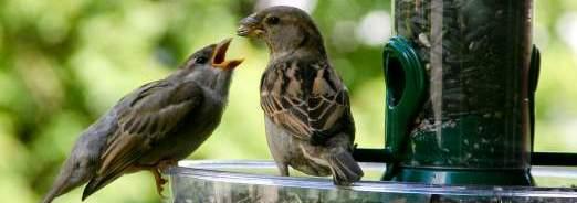 Protéger les oiseaux de l'hiver