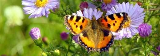 Favoriser la biodiversité