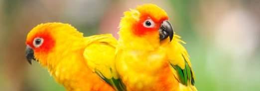 Elever des oiseaux exotiques