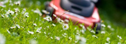 Créer et entretenir sa pelouse