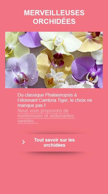 Emejing Salon De Jardin Point Vert Images - Odieardhia.info ...